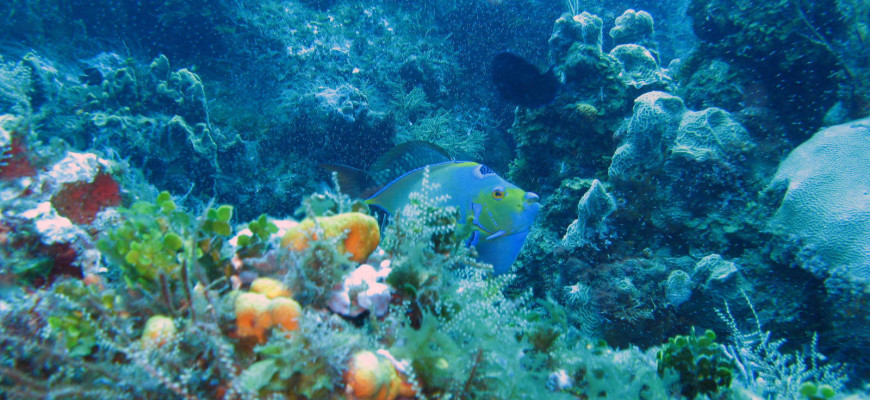 Cozumel Scuba